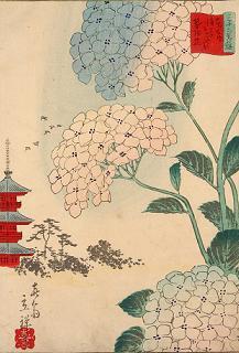 ukiyoe-ajisai