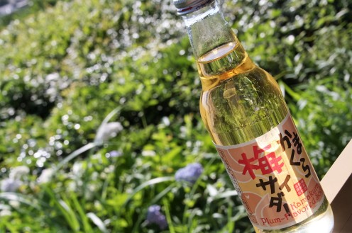 kamakura plum cider@engakuji