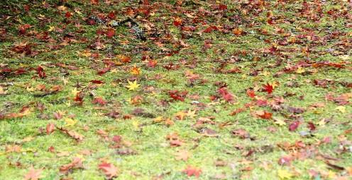 musk-carpet