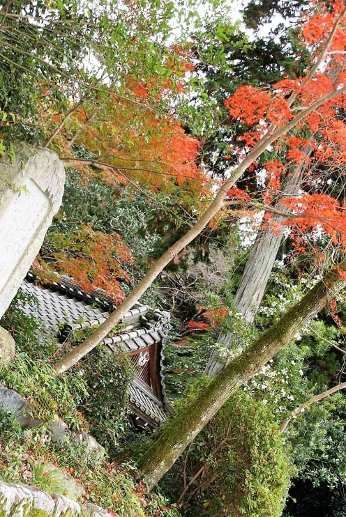 shimo-daigo