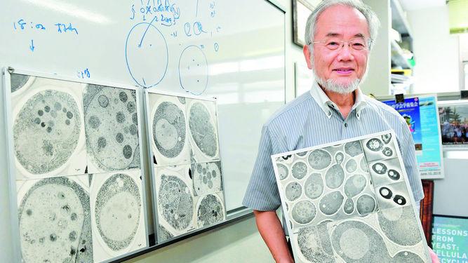 Yoshinori-Ohsumi-premio-Nobel.jpg